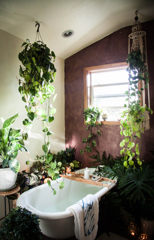 plants in bathroom scene
