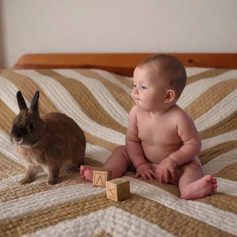 Ada and Bunny