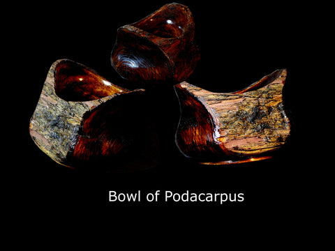 "Bowl of Podacarpus ""The Purse"""