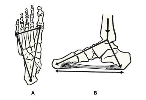 Three point of contact rule or tripod foot for barefoot training