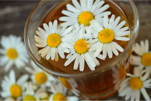 Ingredient Focus: Chamomile