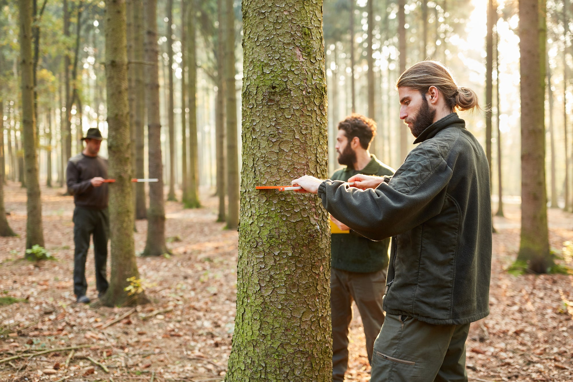 Men measuring Diameter at Breast Height (DBH) in a forest