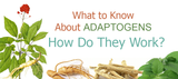 What to Know About Adaptogens and How Do They Work?