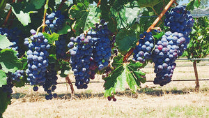 It's almost Vintage 2016 at Grace Farm