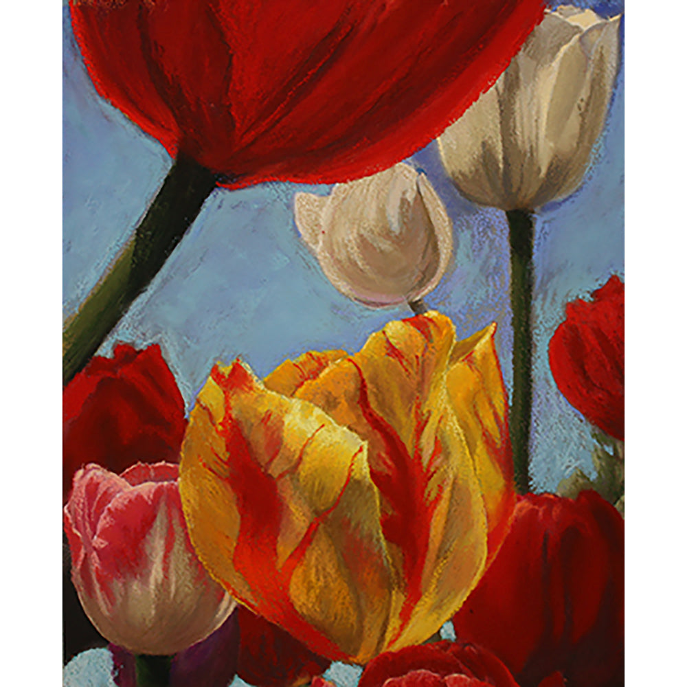 Floriade tulips - study by Roger Beale