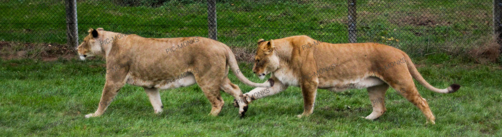 Sibling Animosity Explained, In Pictures