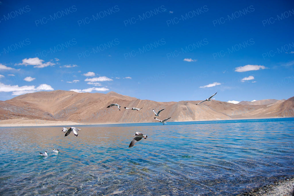 Birds On The Unbelievably Beautiful Nubra River