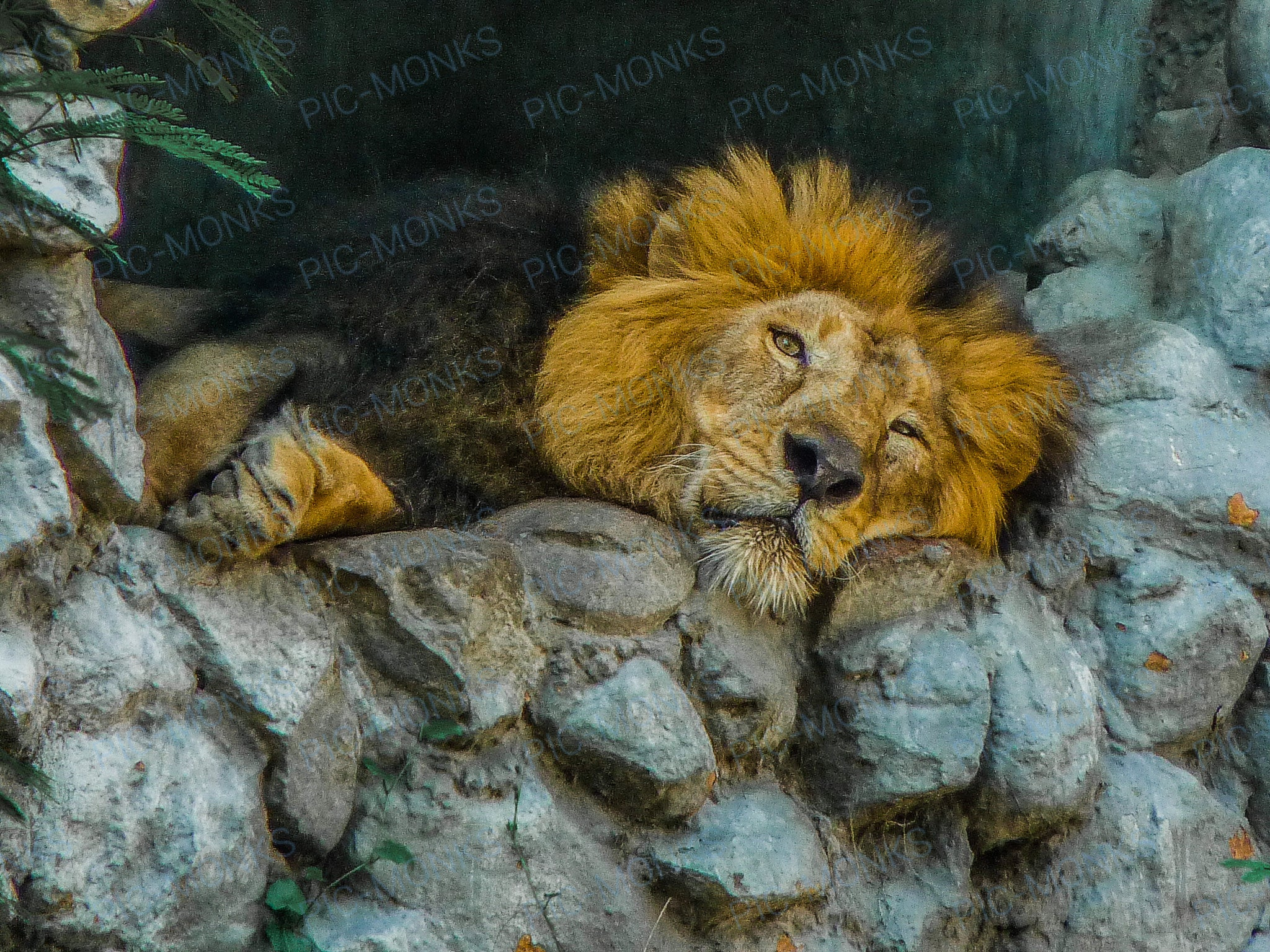 The King Rests