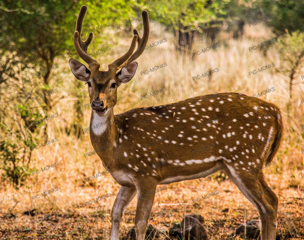 Spotted A Spotted Deer