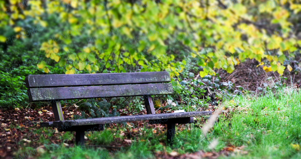 A Bench To Listen To The Birds
