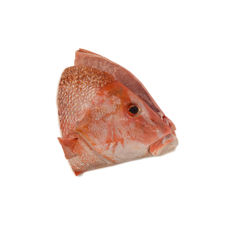 Red Emperor Fish Head