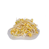 Big Beansprouts (500g) (黄豆芽 / 大豆芽)