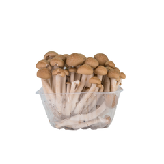 Brown Shimeji Mushrooms