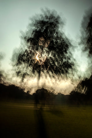 Fragmented, blurred image of a tree at dusk