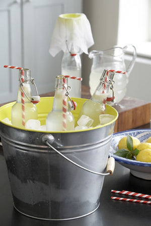 Homemade Lemonade Drinks Maker - Everything you need in one bag - Gardenbox