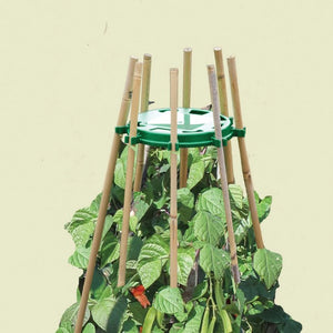 Bean & Pea Ring Plant Support - Gardenbox