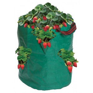 Strawberry or Herb Growing Bag in Green - Gardenbox