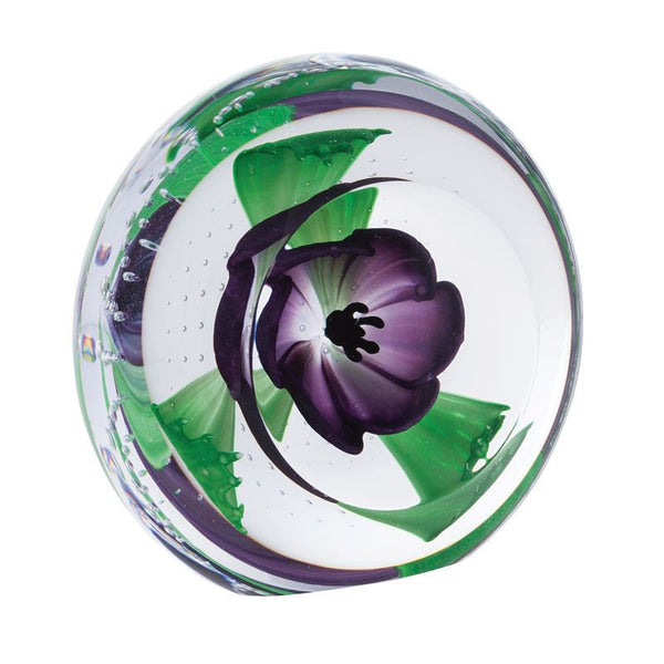 Caithness Glass Limited Edition Purple Anemone Windflowers Paperweight