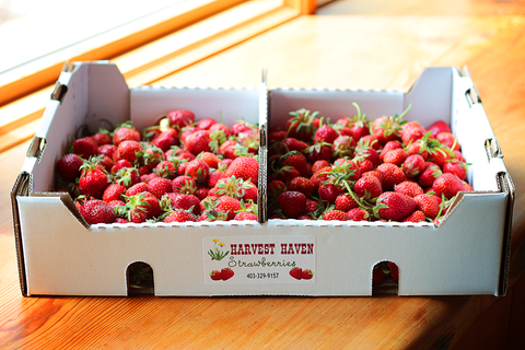 Strawberries - Harvest Haven