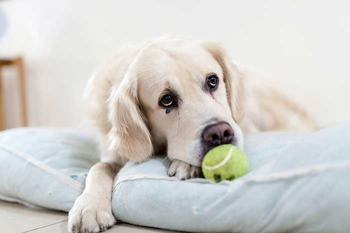Nine ways to ease your arthritic dog's pain
