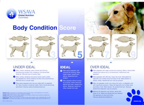 maintain dog's ideal weight to help arthritic dog
