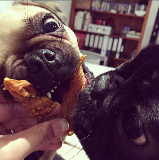 Ted and Cookie approve their grain free chicken jerky from Barking Obito - The best dog treats in Australia