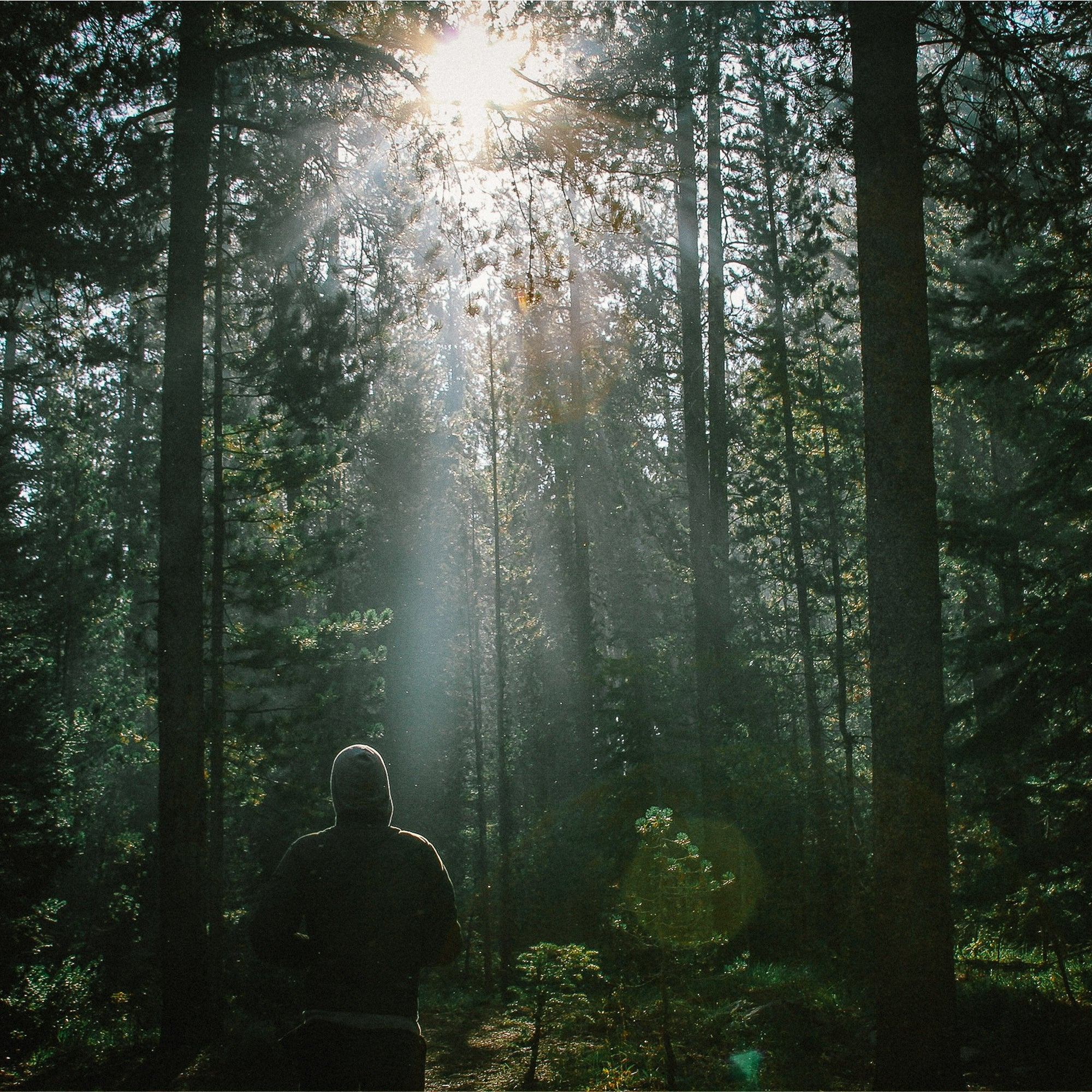 forest men About this retreat do you need to just get away so you can focus on god's calling in your life are you looking to forge a bond with like-minded men from your church.