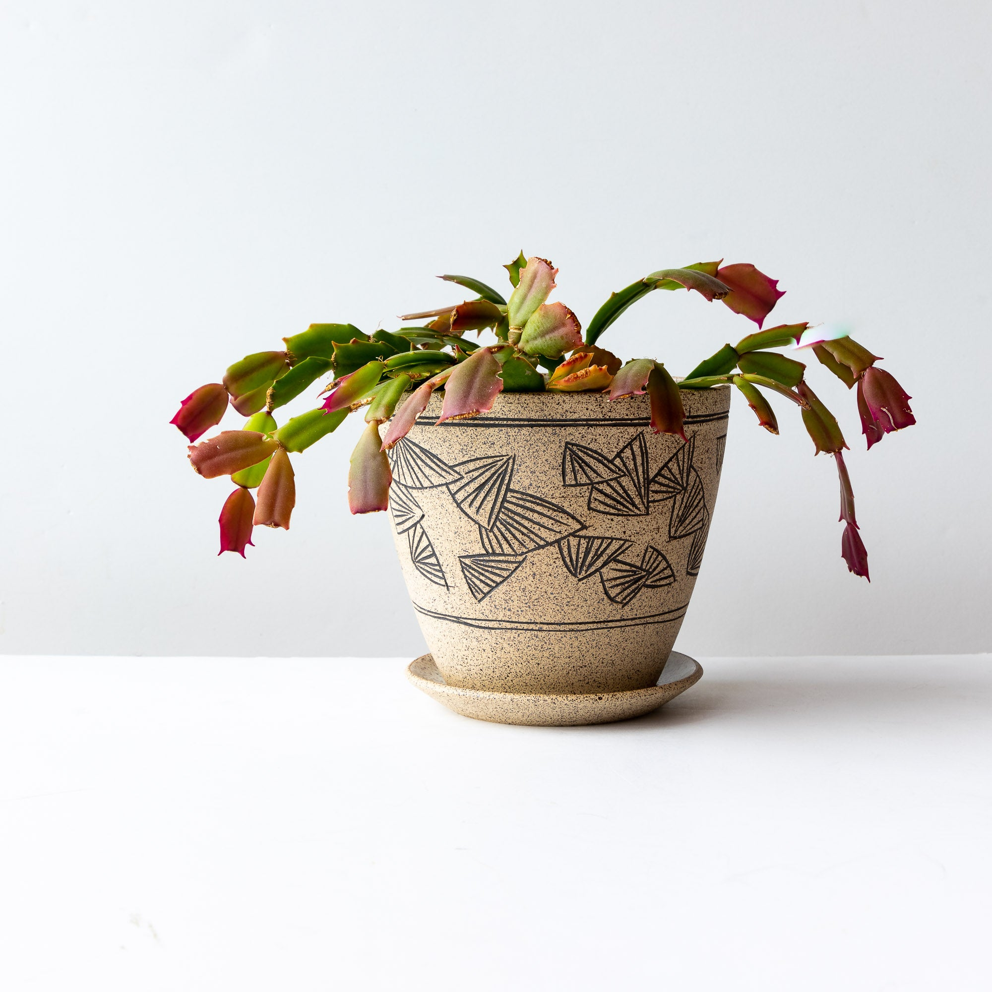 Handmade Mishima Stoneware Plant Pot With Saucer - Shown With Plant - Sold by Chic & Basta