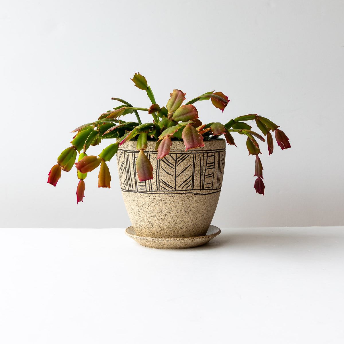 Shown With Plant - Line Pattern - Handmade Mishima Stoneware Plant Pot With Saucer - Sold by Chic & Basta