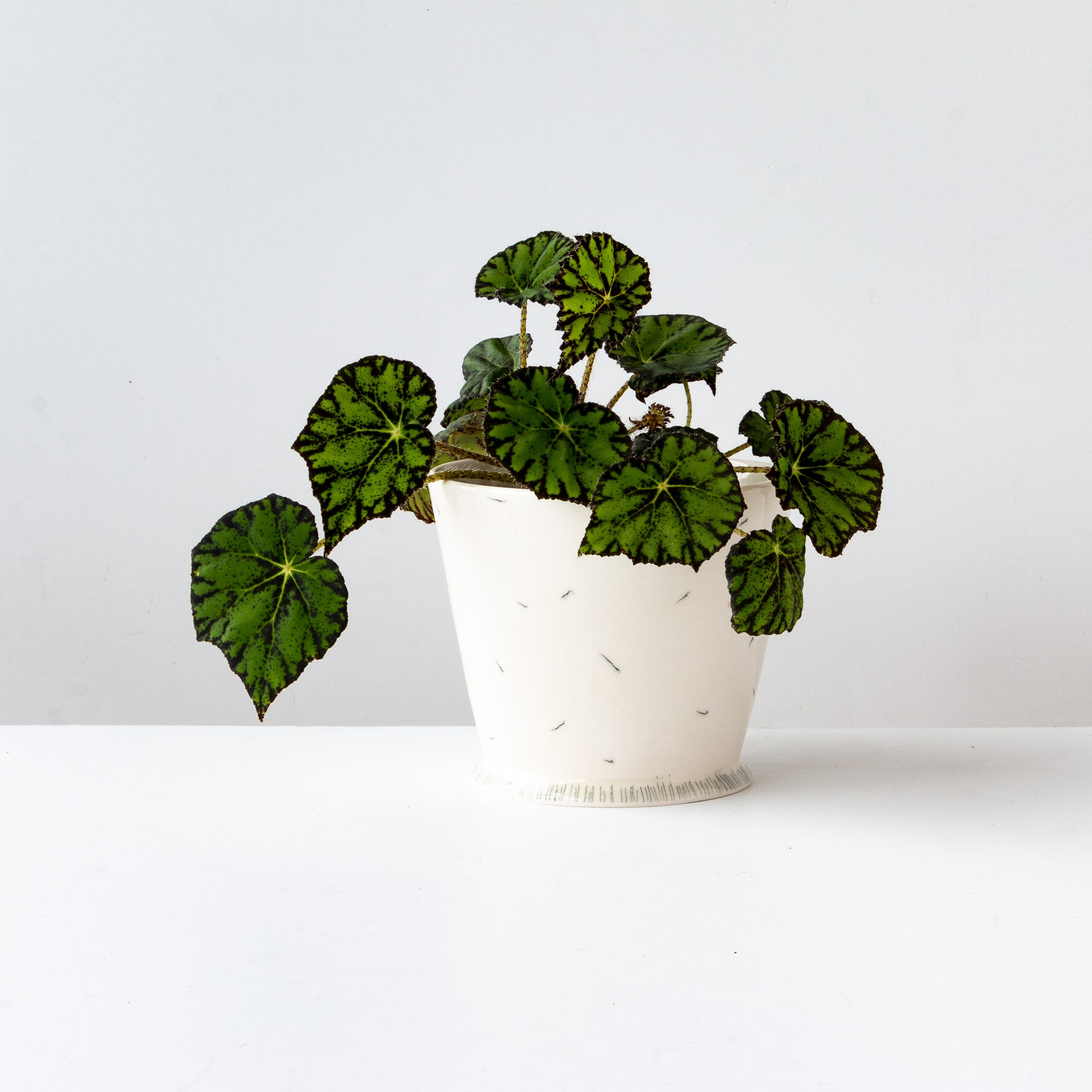 White Handmade Porcelain Planter Pot With a Plant - Sold by Chic & Basta