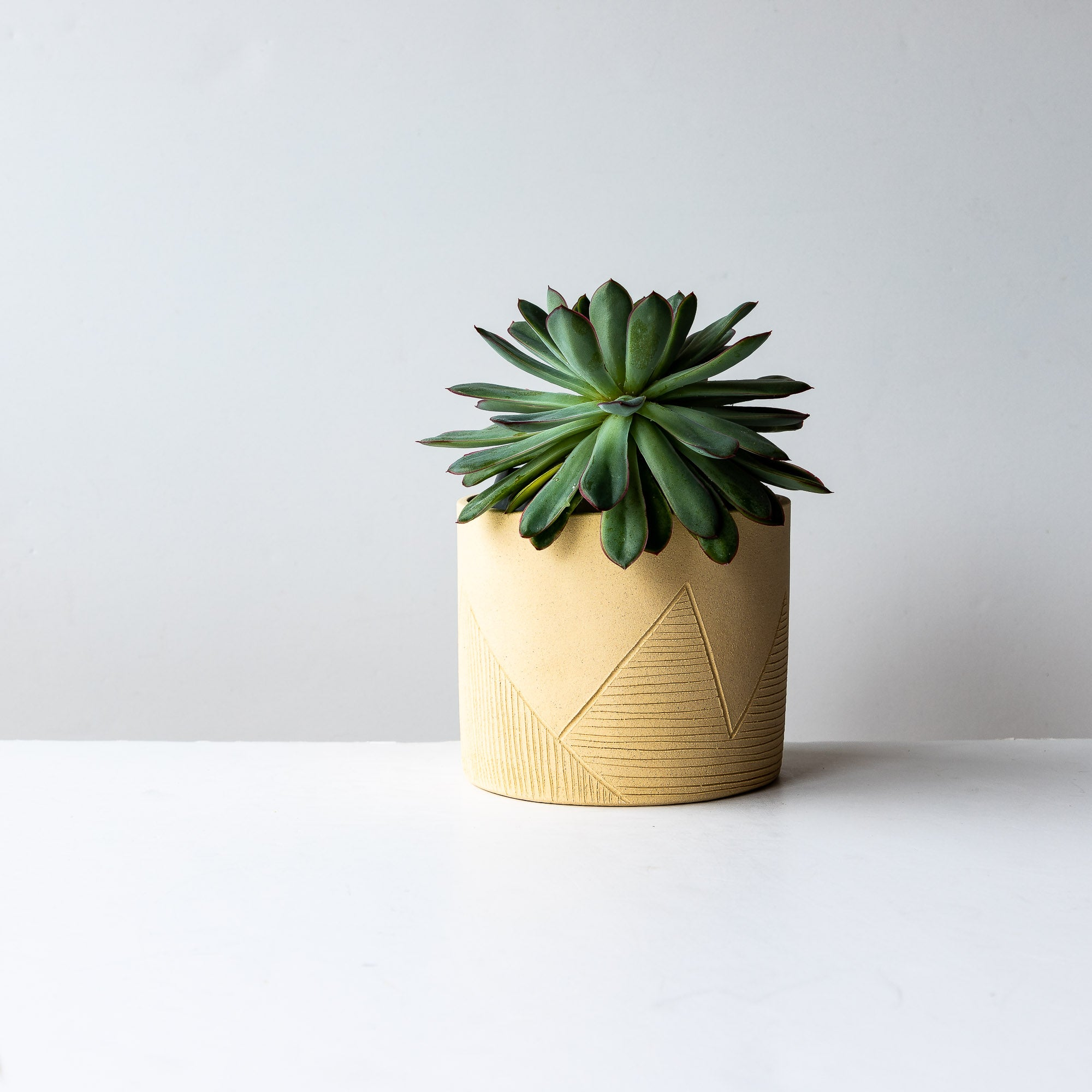 Sonora - Pot / Cache pot in Unglazed Engraved Stoneware Shown with Cacti - Sold by Chic & Basta