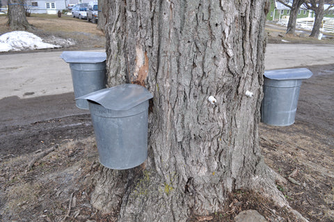 buckets hanging from trees