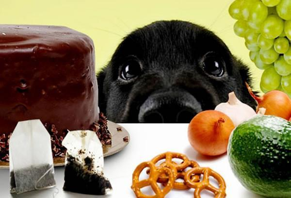 Foods That Can Be Poisonous To Dogs And Other Animals