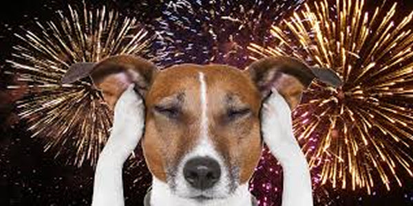 10 Warnings, Tips and Dangers for Pets 4th of July Fireworks