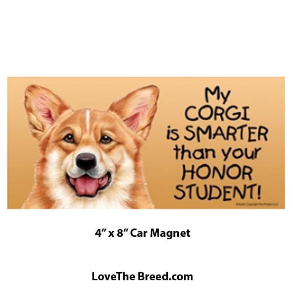 My Corgi is Smarter than Your Honor Student