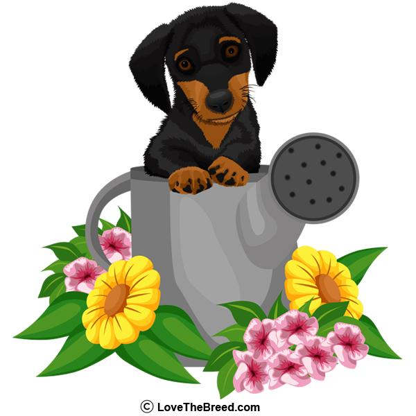 Dachshund Black and Tan in Watering Can Tote