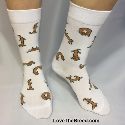 Dachshunds Socks Everywhere LIMITED EDITION