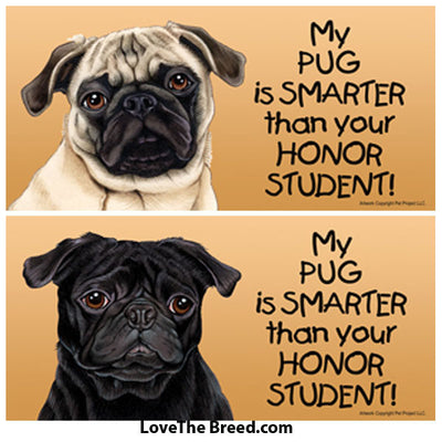 My Pug is Smarter than Your Honor Student