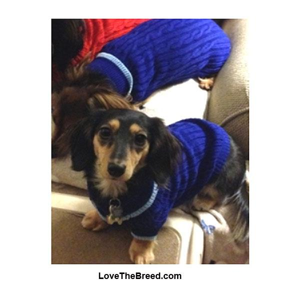Dog Sweater Classic Cable Knit Blue