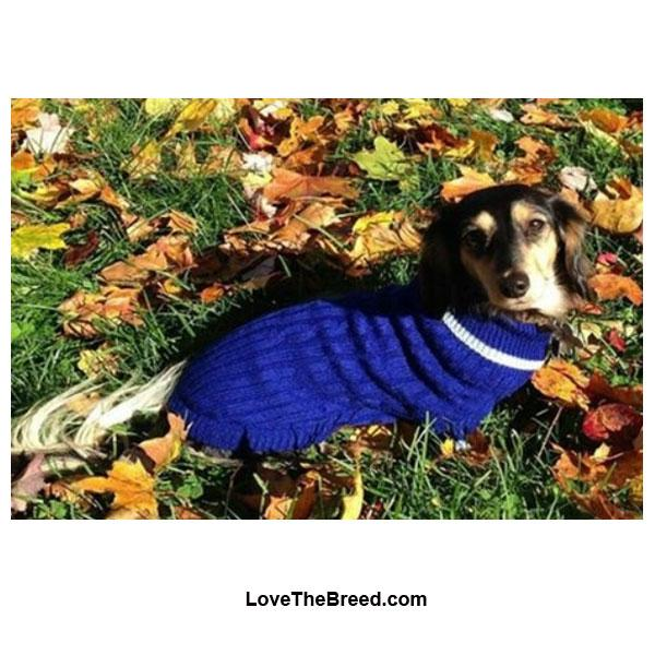 Dog Sweaters Rain Coats Lovethebreedcom