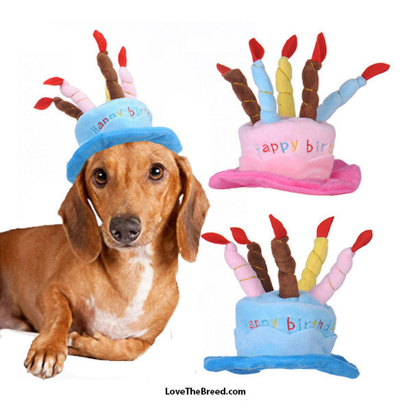 Birthday Cake Hats Small Dog