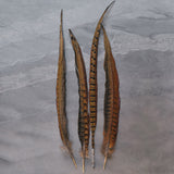 Fife Pheasant Feathers