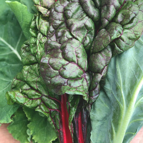 Home Grown Chard