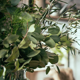 We create simple, bespoke florals to order and stock a range of seasonal house plants