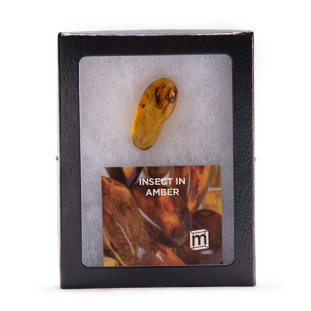 Large Insect in Amber