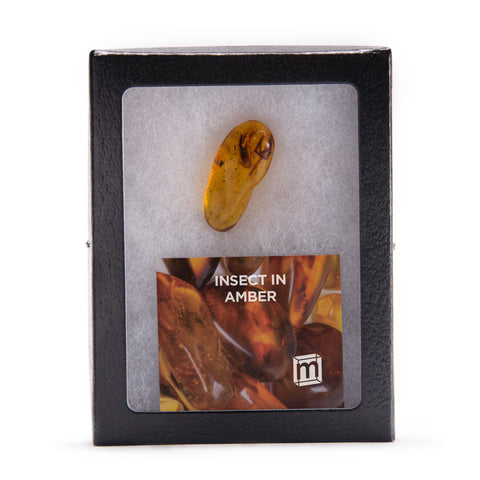 Mini Museum Insect in Amber (LARGE)