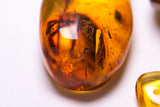 Macro image of Large Insect in Amber Specimen
