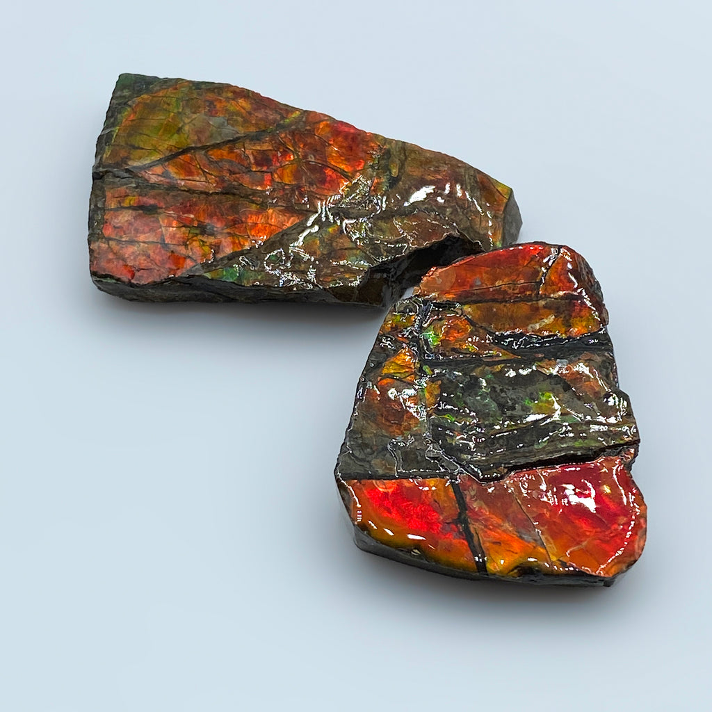 Ammolite - Gem Quality Ammonite Fossil Fragment