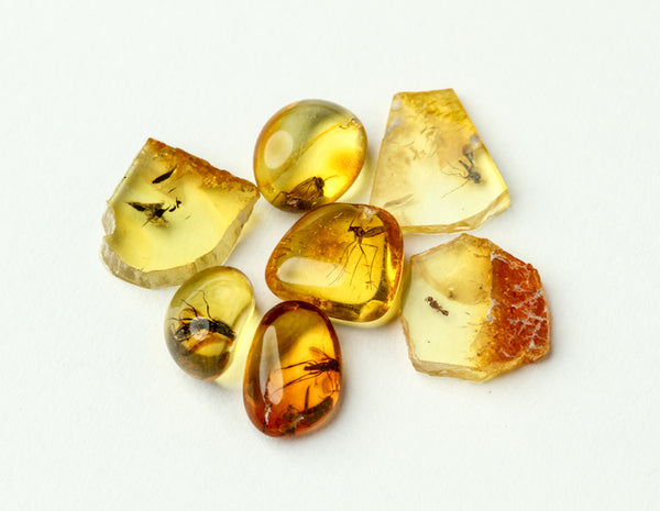 A selection of Small Insect in Amber Specimens