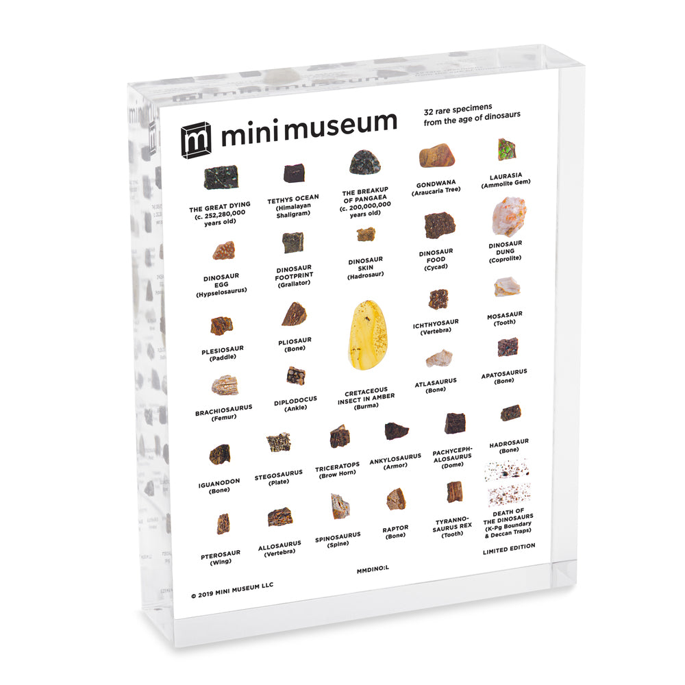 Mini Museum - Age of Dinosaurs (LARGE - 32 Specimens)
